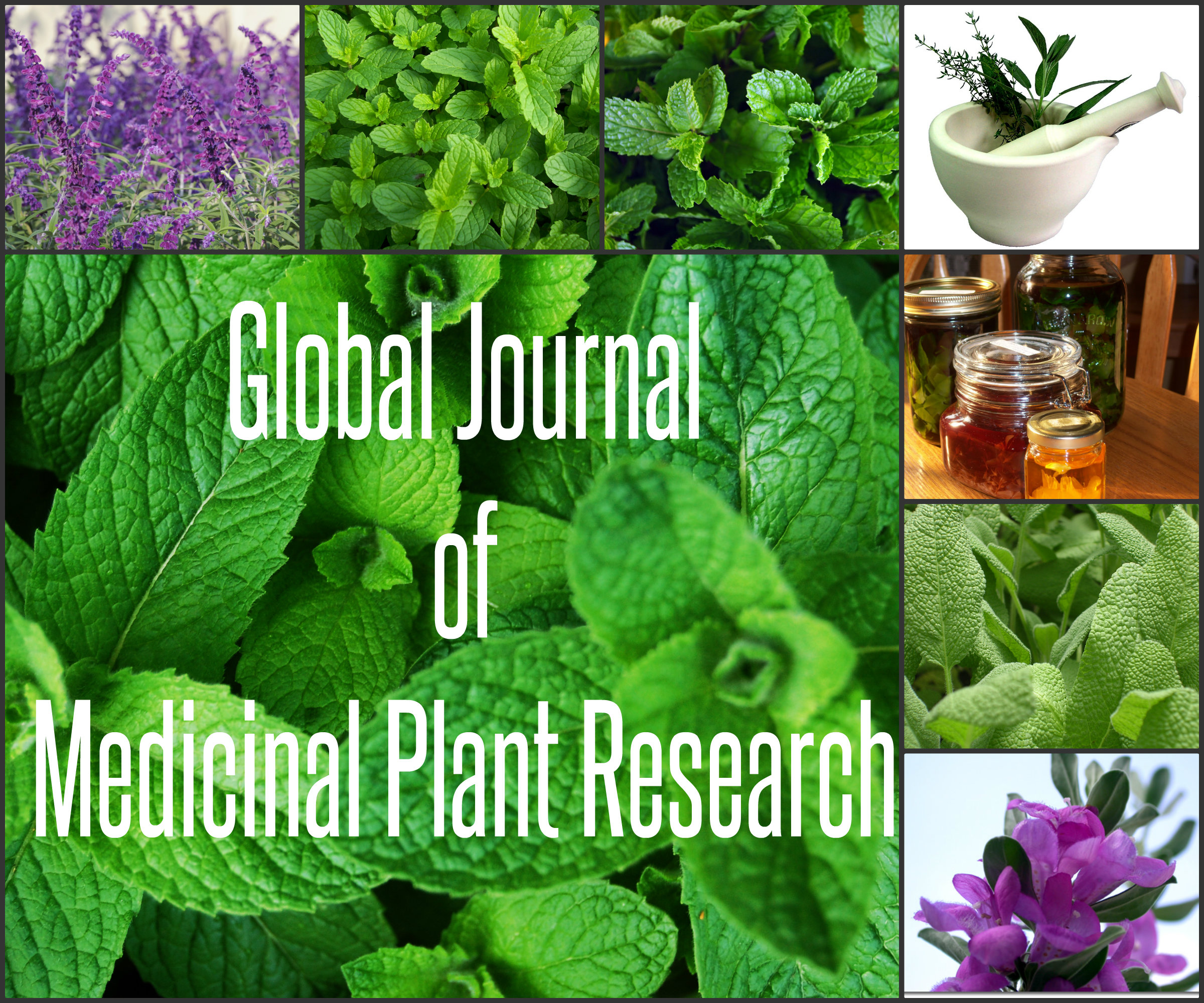 medicinal plant research paper